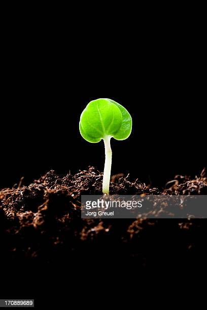 Flower seedling growing out of soil