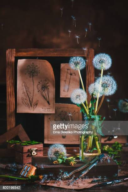 Flower still life with dandelions is a vase and a rack of aviation blueprints