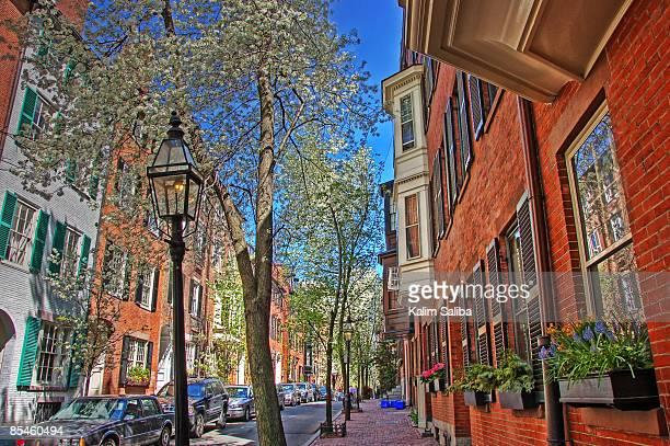 Flower & Tree Lined Beacon Hill Street