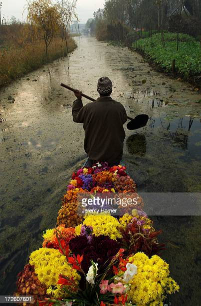 SRINAGAR JAMMU KASHMIR INDIA A flower vendor paddles his canoe away from Srinagar's floating market congregates where the canals that feed into Dal...