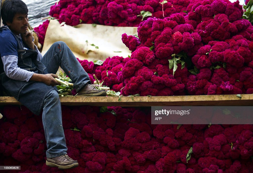 A flower vendor waits for clients at the Jamaica market in Mexico City, on October 31, 2012, as Mexicans prepare to celebrate the traditional Day of the Dead. AFP PHOTO/ Pedro Pardo