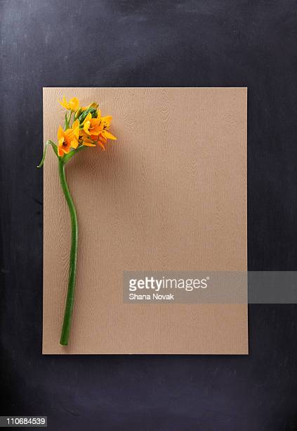 Flower With Paper