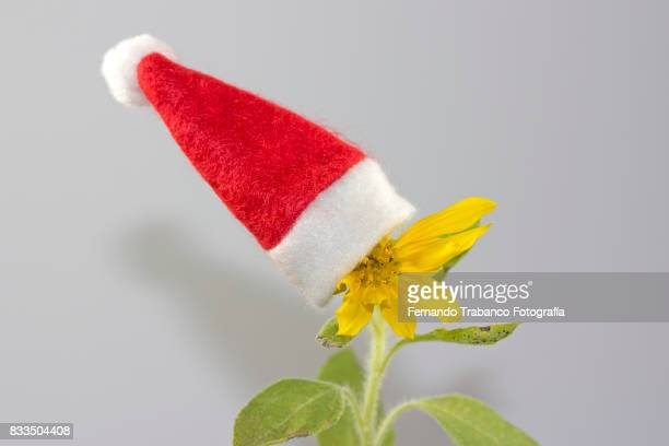 Flower with Santa hat