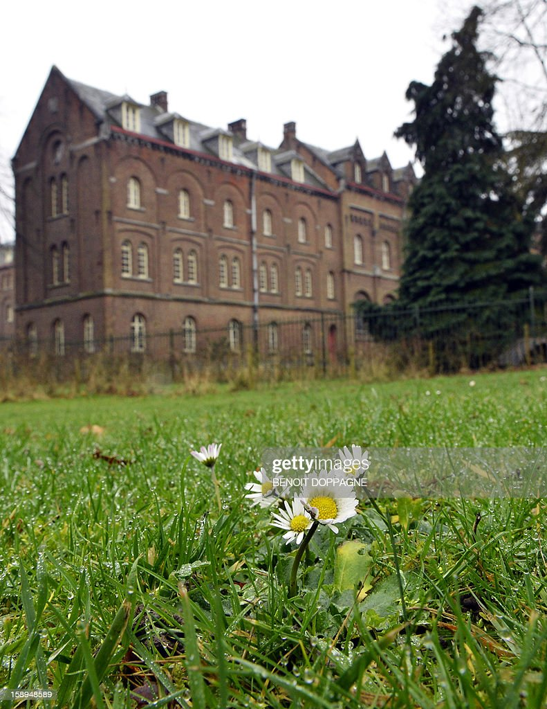 Flowering daisies are seen at the Parc at the Keizerbergs Abbey in Leuven on January 4, 2013. AFP PHOTO / BELGA - BENOIT DOPPAGNE