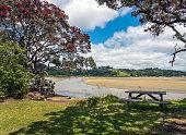 Flowering Pohutakawa Tree and Puhoi River Estuary in Wenderholm Regional Park, Hibiscus Coast, near Auckland, New Zealand