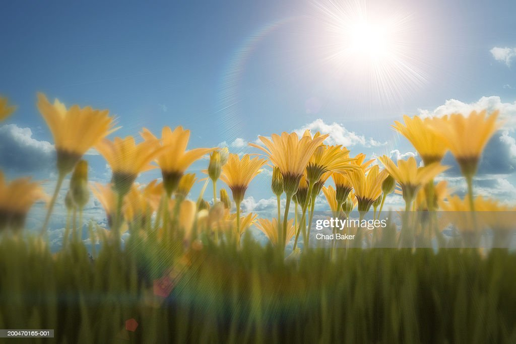 Flowers against blue sky (Digital) : Stock Photo