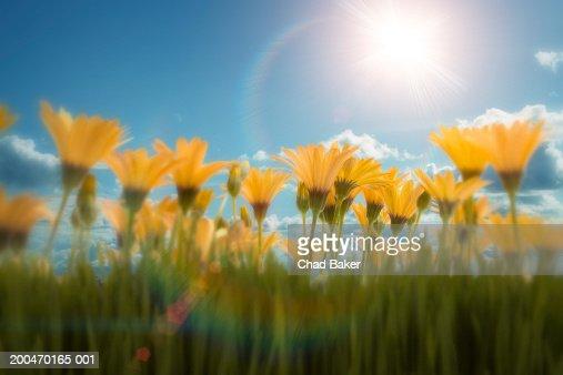 Flowers against blue sky (Digital) : Stock Photo