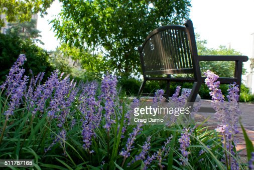 Flowers and bench : Stock Photo