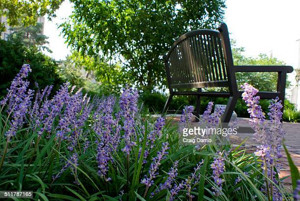 Flowers and bench