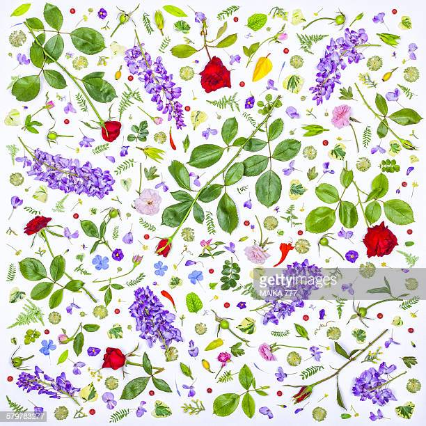 Flowers and leaves, seamless pattern, on white