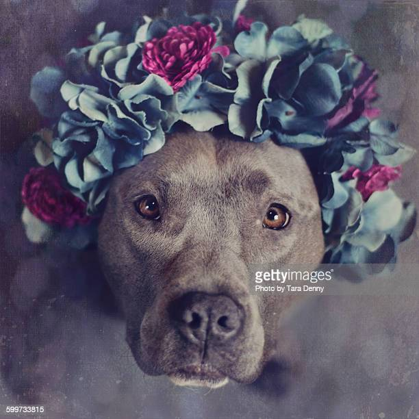 Flowers and PitBull