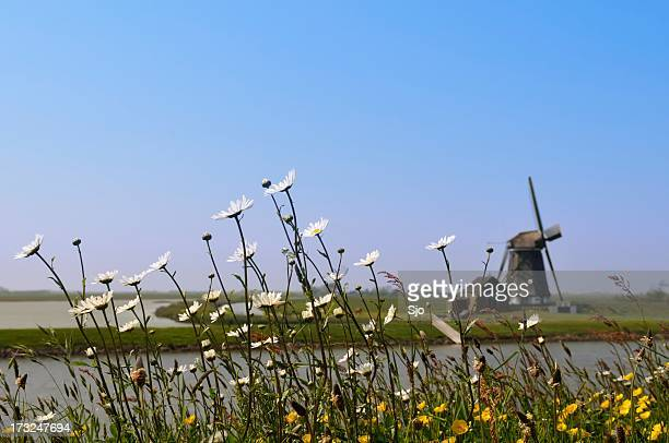 Flowers and windmill