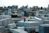 Flowers are placed at a cemetery where most of tomb stones remain toppled since the tsunami devastated five years ago as the area had been designated...