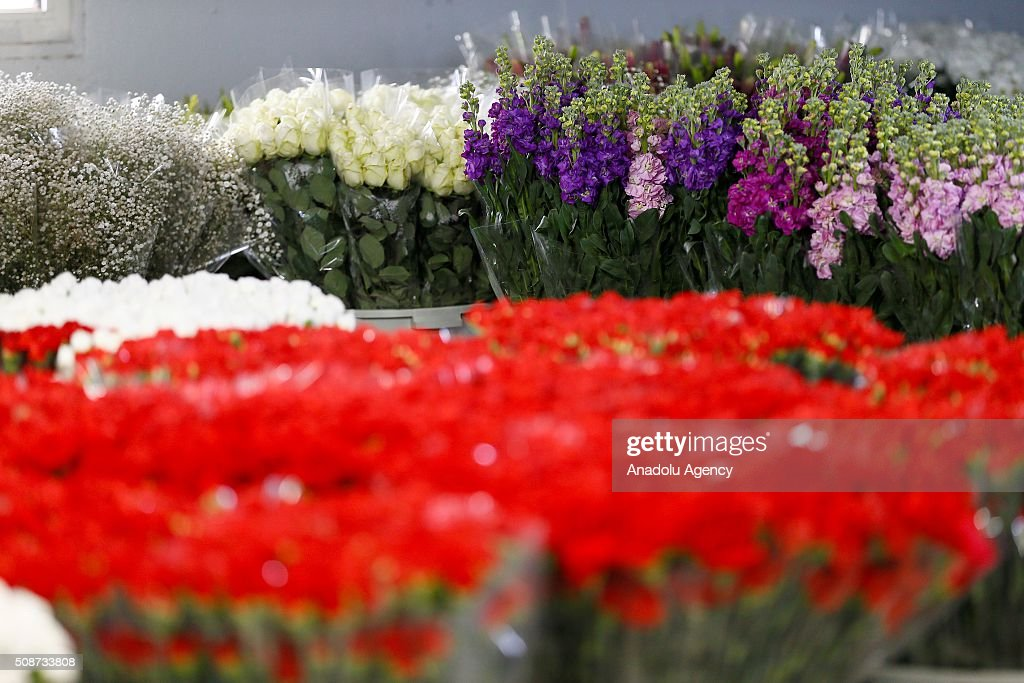 Flowers are seen as Turkish local rose and flower cultivators display their harvest to wholesale buyers ahead of Valentine's day in Izmir province of Turkey on February 6, 2016. Rose growth in Turkey meets approximately 60% of the whole demand of the world. Sellers expect rose sales to increase one million on upcoming Valentine's days.
