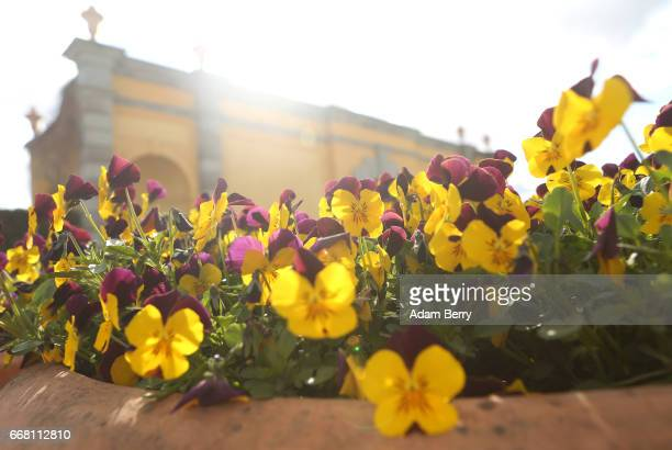 Flowers are seen in front of a recreation of a Renaissance garden at the IGA International Garden Exhibition on April 13 2017 in Berlin Germany The...
