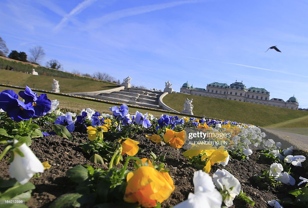 Flowers are seen in the gardens of the Belvedere Palace on a clear day in Vienna on March 20, 2013.