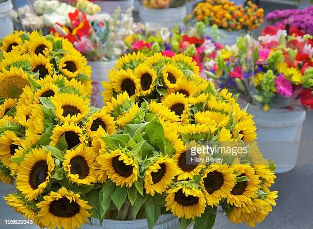 Flowers at Farmer's Market