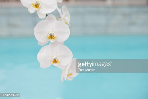 Flowers at poolside