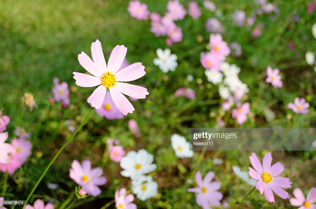Flowers Beauty : Stock Photo