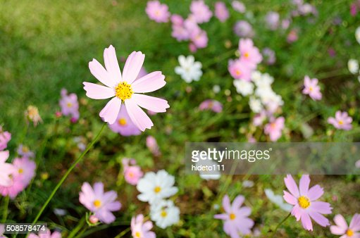 Fiori di bellezza : Foto stock