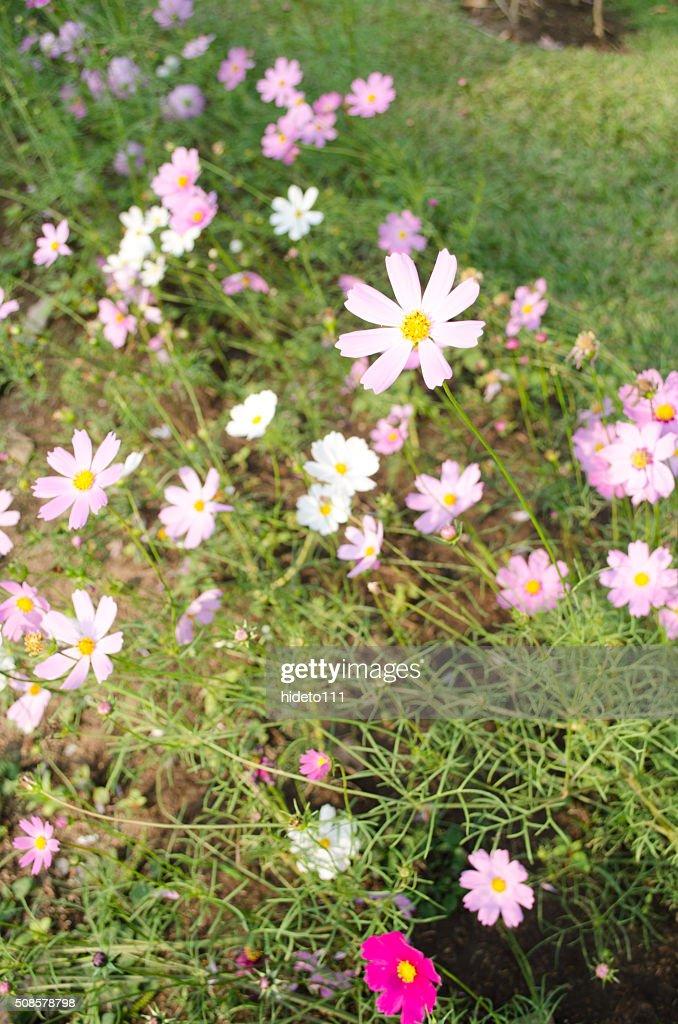 Blumen Schönheit : Stock-Foto