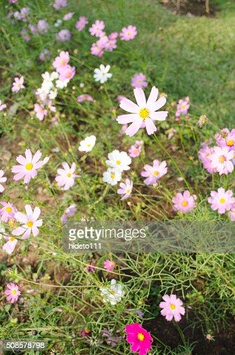 花の美しさ : ストックフォト