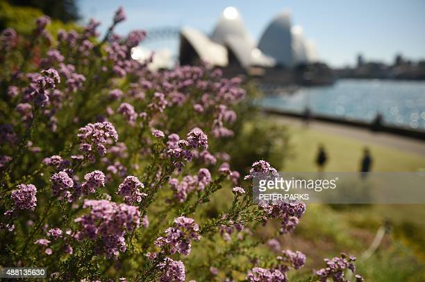Flowers bloom as visitors enjoy the sunshine in the Botanical Gardens in Sydney as winter turns to spring on September 14 2015 AFP PHOTO / Peter PARKS