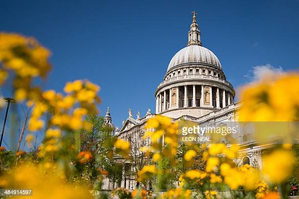Flowers bloom in the spring sunshine near St Paul's Cathedral in London on April 15 2014 The majority of Britain continued to enjoy fine Spring...