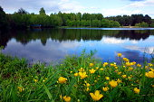 Wild flowers blossoming at the edge of a lake, tranquil spring landscape