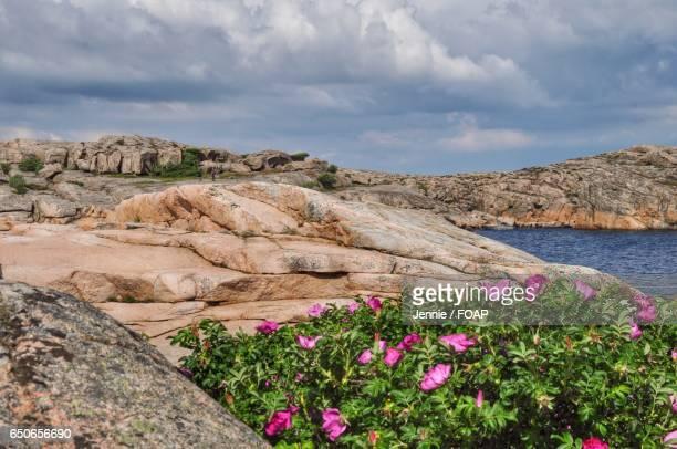 Flowers blooming on plant against rocks
