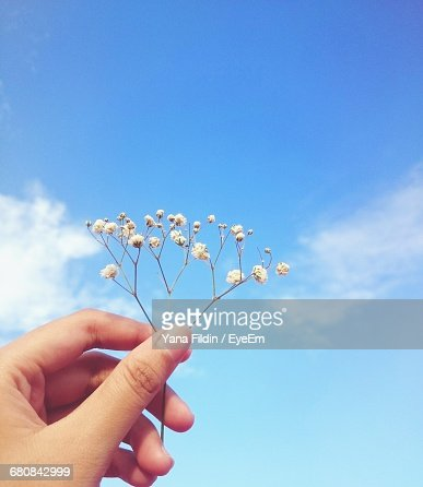 Flowers Blooming On Tree Against Clear Sky