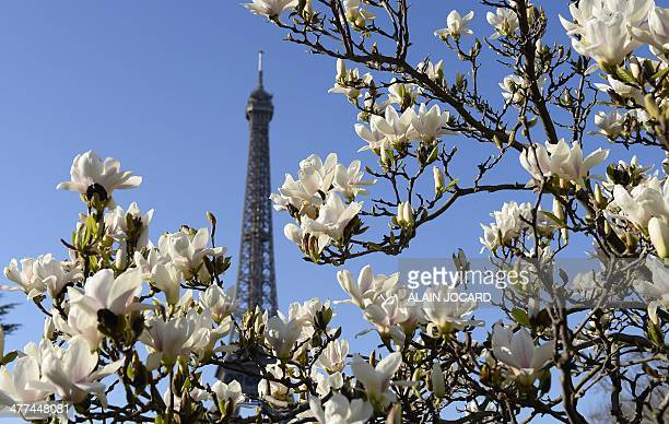 Flowers blossom near the Eiffel Tower in Paris on March 9 2014 AFP PHOTO/ ALAIN JOCARD
