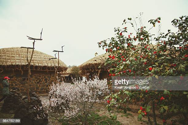 Flowers Blossoming In Field With Thatched Roofs