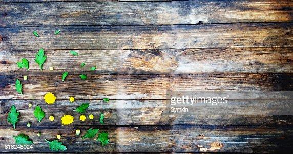 Flowers bright perspective. Flower composition. : Foto de stock