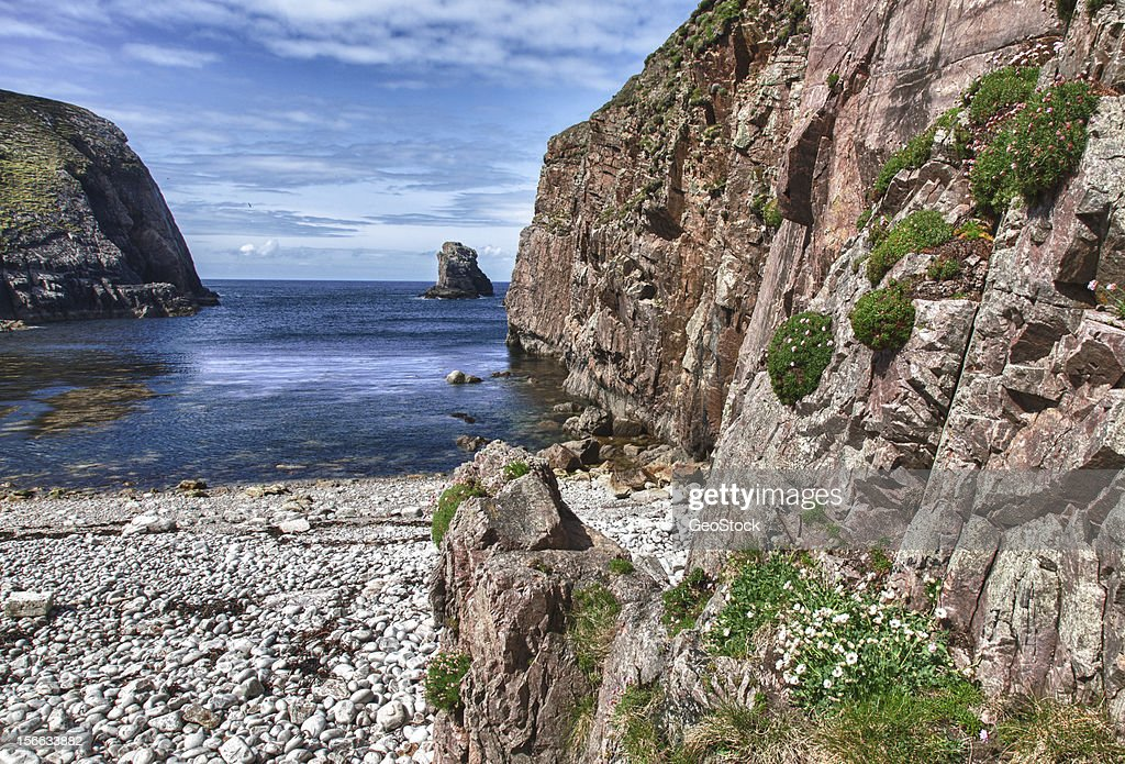Flowers by the Sea, a view of the Atlantic Ocean : Stock Photo