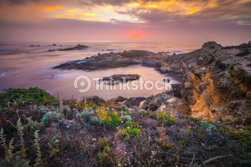 Flowers by the Sea : Stock Photo