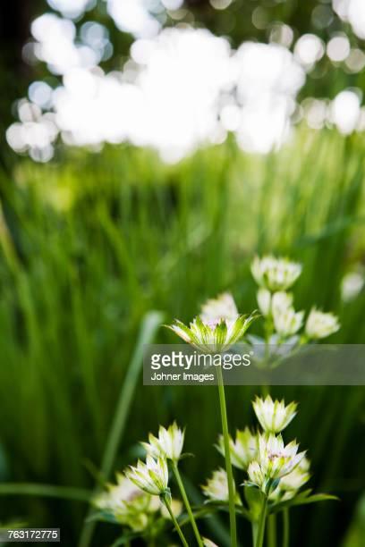 Flowers, close-up