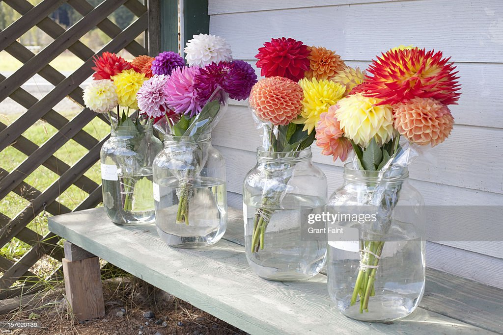 Flowers for sale : Stock Photo
