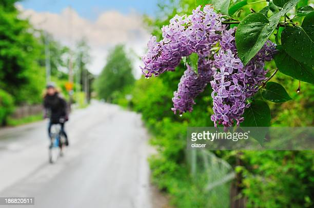 Flowers, girl on bike off focus in background