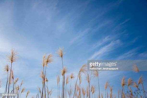 Flowers grass blurred bokeh with beautiful blue sky with cloud