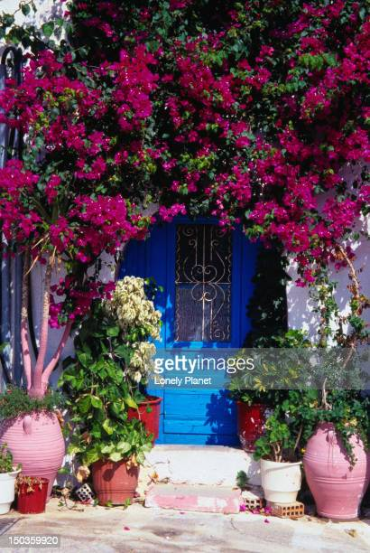 Flowers grow in an archway over a house door - Rethymno, Rethymno Province, Crete