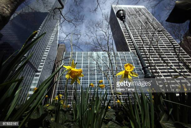 Flowers grow in Bryant Park in unseasonably mild weather March 18 2009 in New York City Temperatures approached 70 degrees with Spring arriving on...