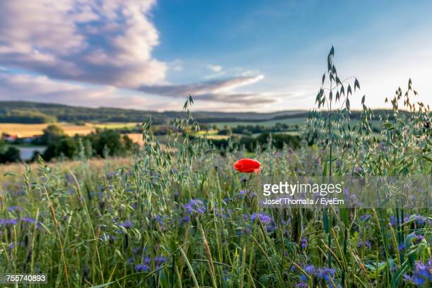 Flowers Growing On Field Against Sky
