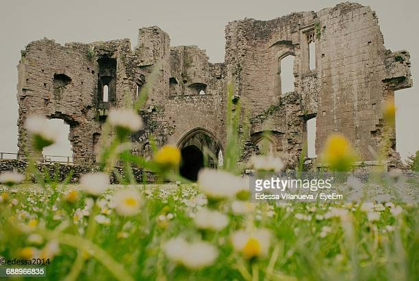Flowers Growing On Field By Raglan Castle Against Sky