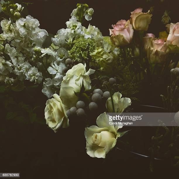 Flowers Illuminated