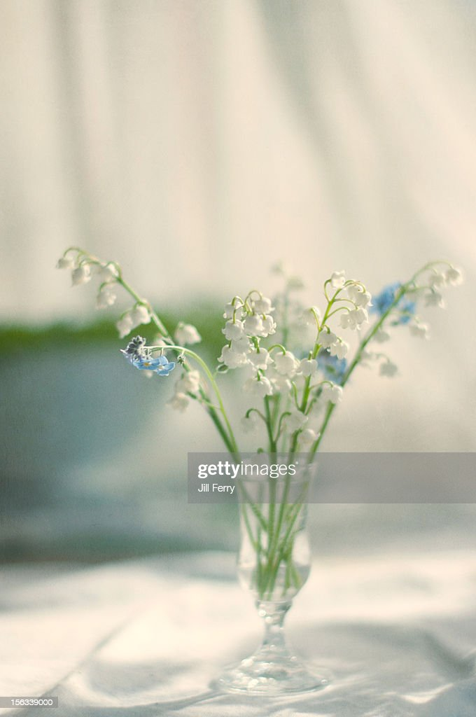 Flowers in a vase : Stock Photo
