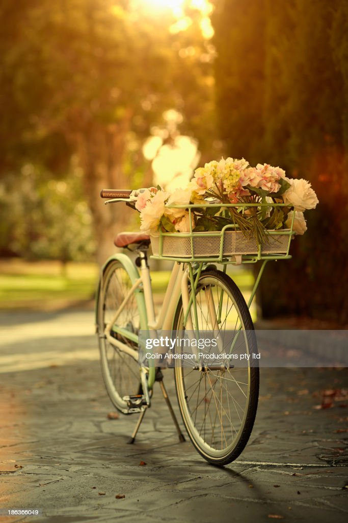 Flowers in bicycle basket : Stock Photo