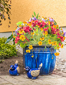 freesia flowers in blue pot  in garden