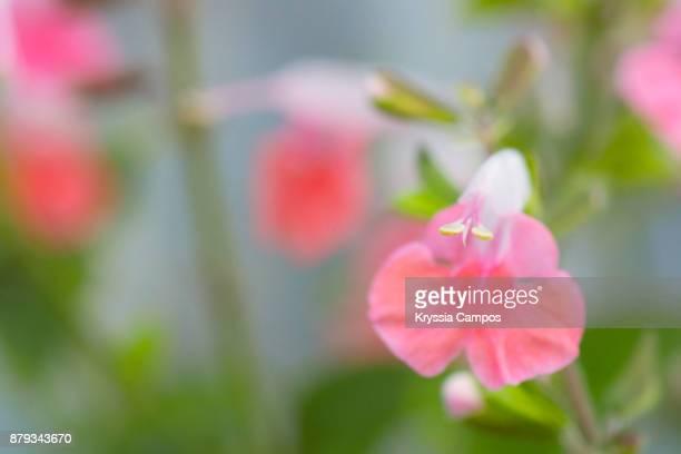 Flowers in Costa Rican Garden