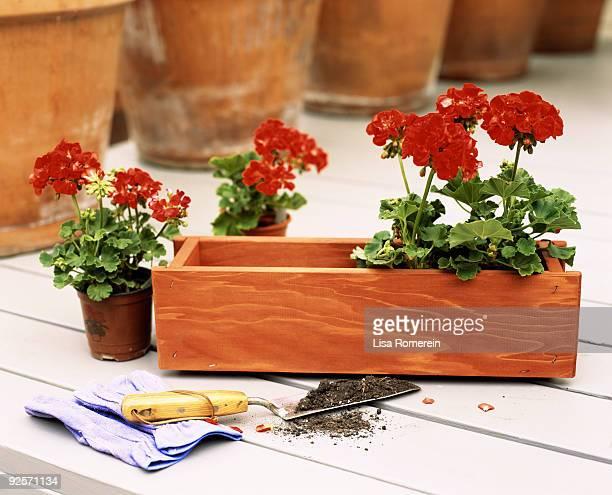 Flowers in flower box